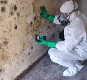 Testing black mold with a sensor during mold remediation in San Diego, California