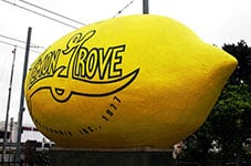 The Lemon Grove lemon