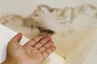water damage restoration specialist points out mold damage on an interior ceiling