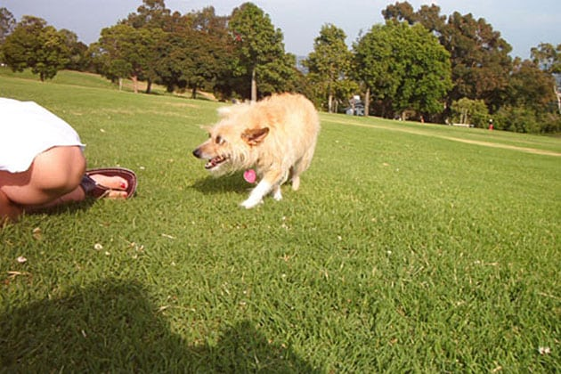 Dog at Kate O'Sessions Park in San Diego