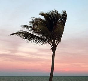 a palm tree in high wind