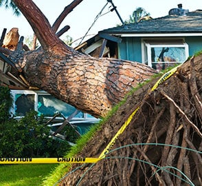 Storm damage in San Diego caused by tree landing on house