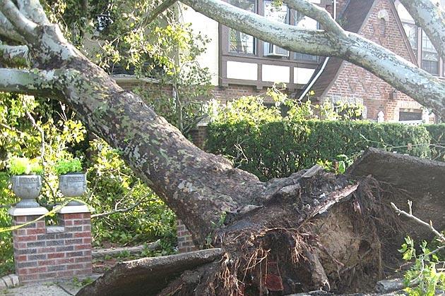 tree fell on the house